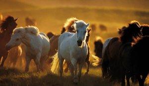 День коней